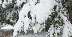 4K, Snow on the brunches of trees in cloudy day Stock Footage