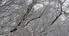 4K, snow on the brunches of trees with autumn colors Stock Footage