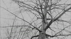 Trees and snow in super-8 Stock Footage