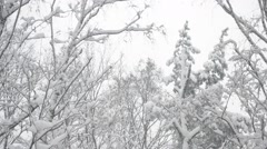 Tops of trees in a mixed forest swaying gently in wind in snow Stock Footage