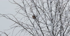 4K, Birds on the brunches of the  trees in the winter time Stock Footage