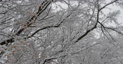 4K,  snow on the brunches of trees Stock Footage
