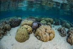 Corals in Shallows Stock Photos