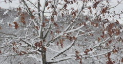 4K, Winter trees after the first snow. Upstate NY - stock footage
