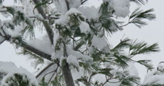 4K, Winter tree brunches after snowfall Stock Footage