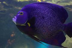 Glow Fish Stock Photos