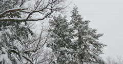 4K, Winter tres with first snowfall in the season Stock Footage
