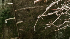 sun glistens off icy tree branches icicles - stock footage