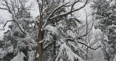4K, Winter trees after the first snow. Upstate NY Stock Footage