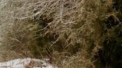 melting ice tree limbs - stock footage