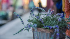 Lavender growing from pot outside Stock Footage