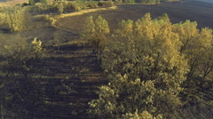 Pine and poplar tree forest burnt area, aerial view - stock footage