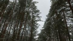 Pine trees in the snow, view from below 4K Stock Footage