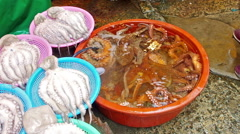 Alive octopus for sale in Busan korea Stock Footage