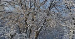 4K, Winter brunches with autumn colors after first snow,  2014 Stock Footage