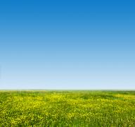 Green grass and fresh, young flowers on spring field. Blue sky Stock Photos