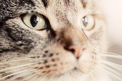Cute cat close-up portrait. Focus on its magnetic eye. Adorable kitten series Stock Photos