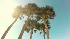 Palm Trees & Lens Flare Stock Footage