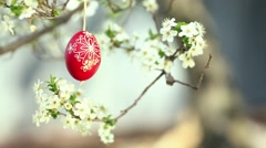 Easter traditional egg hanging on bough with spring cherry blossom Stock Footage