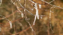 icicles tree limbs close up - stock footage