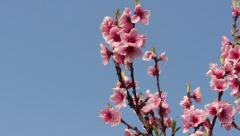 Blossom on the sky Stock Footage