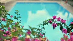 Empty Swimming Pool behind Bougainvillea Flowers - 25FPS PAL Stock Footage