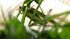 Green Grasshopper Shot Through The Green Grass Macro Stock Footage