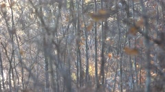 Gray autumn in the forest Stock Footage