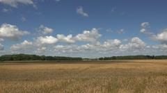 Wheat Field  in gotland  sweden Stock Footage