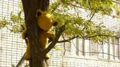 Teddy bear on a tree, abandoned toy, teddy bear Stock Footage
