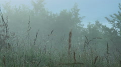 Misty morning in summer Stock Footage