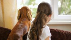 Lovely dog with girl at home Stock Footage