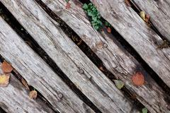 Diagonal rough timber with fall leaves Stock Photos