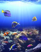 Underwater scene with tropical fish - stock photo