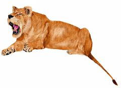 growling lioness - stock illustration