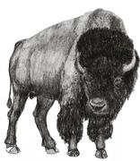 Bison right side view Stock Illustration