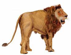 lion side view - stock illustration
