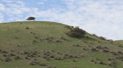 Central California Highway 101 Green Hillside 3 Stock Footage