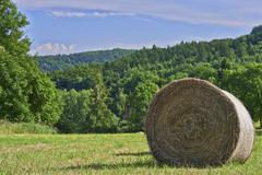 Silage in the meadow - stock photo