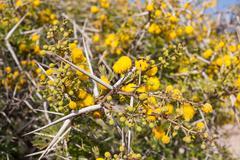 Flora of Souss Masa National Park Stock Photos