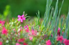 Nature background - purple flowers Stock Photos