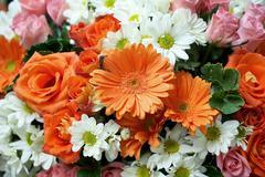 Various flower Stock Photos
