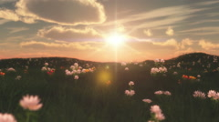 sunset in meadow with flowers - stock footage