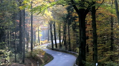 Autumn people trees road vehicle cycle driving Stock Footage