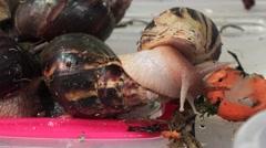 Big, huge snails. 4K. Stock Footage