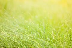 Abstract moisture grass background Stock Photos
