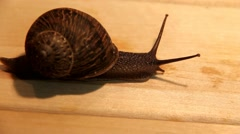 Big garden snail  on a wooden surface Stock Footage