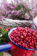 Lingonberries - stock photo