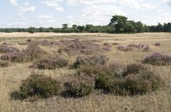 Landscape in National Park Hoge Veluwe. - stock photo