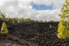 Forest on lava field and clouds Stock Photos